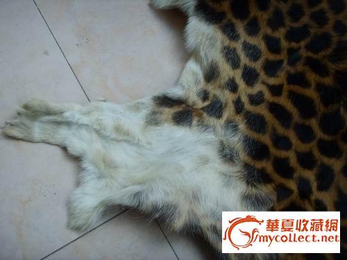 壁纸 动物 狗 狗狗 猫 猫咪 小猫 桌面 500_375