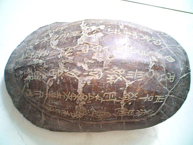 镶字的乌龟壳图片