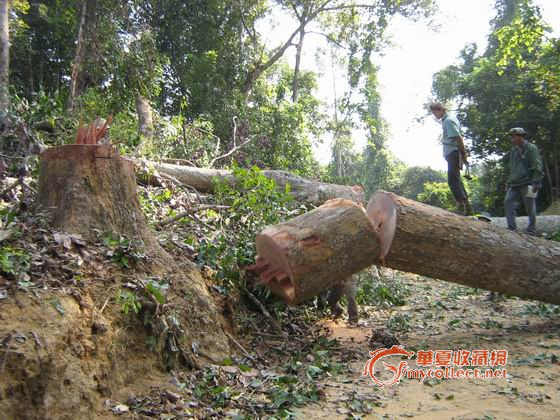 森林砍伐1-图3
