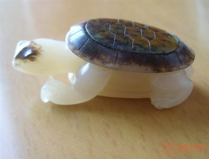 一只挺可爱的小乌龟