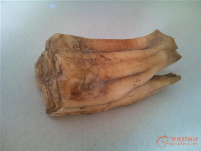 动物牙齿-图1