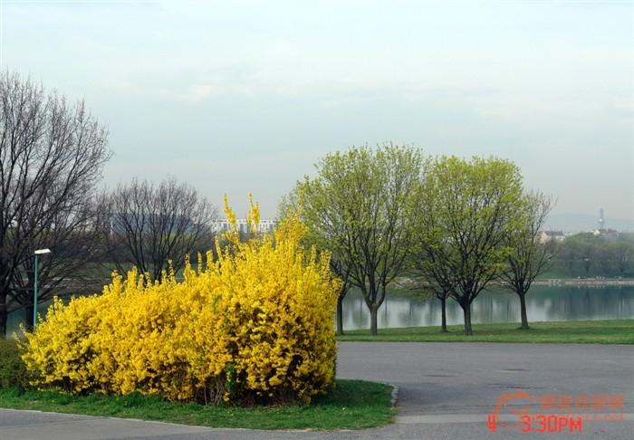 春季下雨风景图