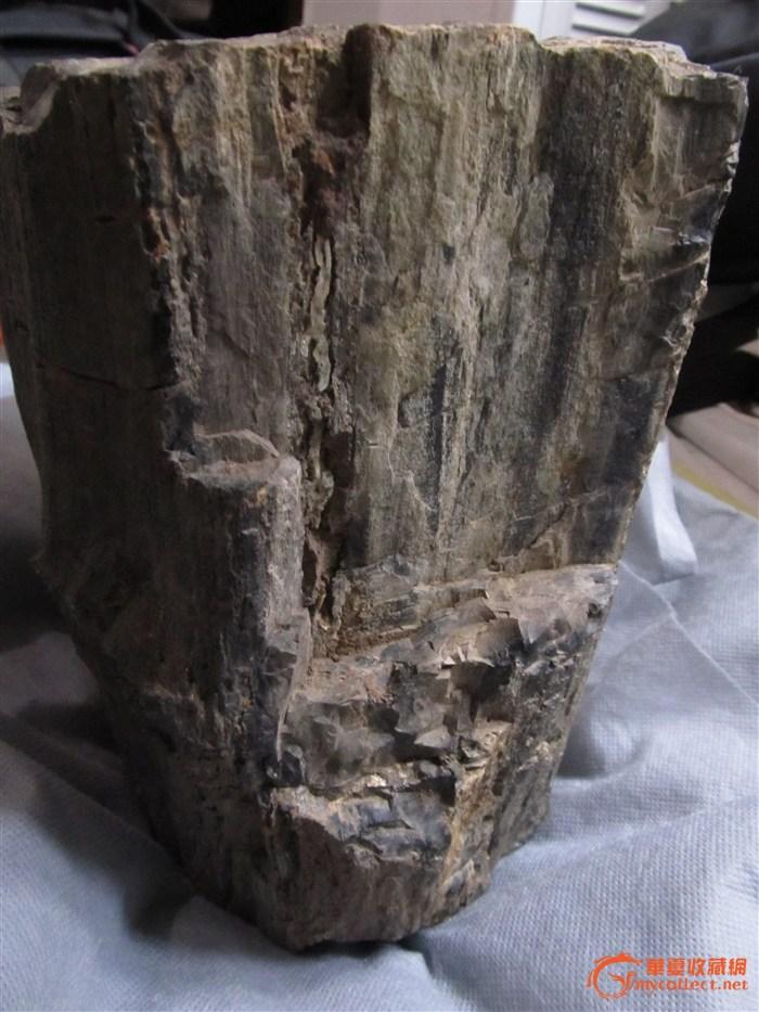 树木化石-图4