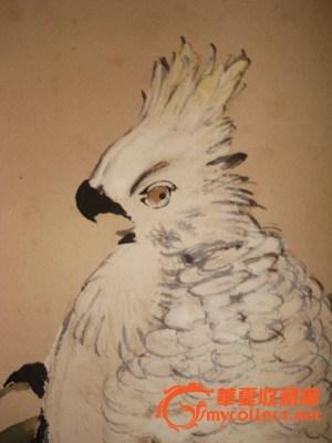 国画写意鹦鹉步骤