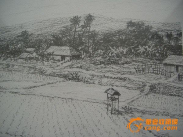 各种大树铅笔画画法展示