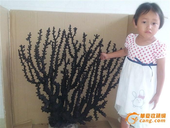 天然的红珊瑚树_天然的红珊瑚树鉴定_来自藏
